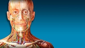 atlas-de-anatomia-humana-3d-7-en-espanol-D_NQ_NP_165021-MLA20683130216_042016-O